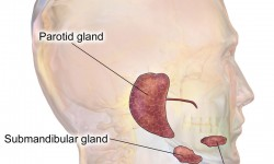 Salivary Gland Problems – Submandibular Gland