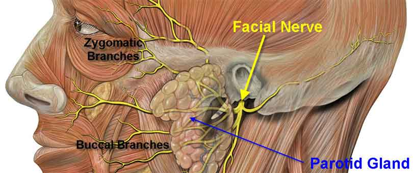 Facial Nerve Palsy - ENT Clinic