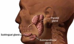 salivary-gland-surgery